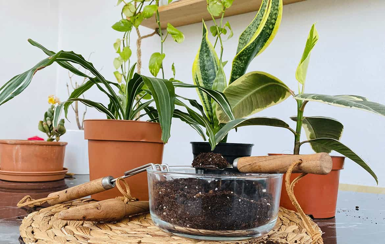 bitki bakım ipuçları