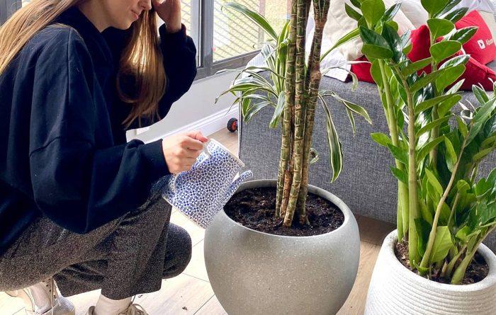bitkiler için su