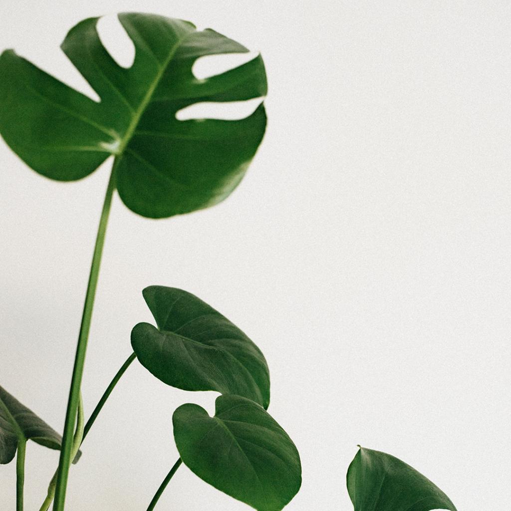 Deve Tabanı Bitki İklim Sorunları Güneş