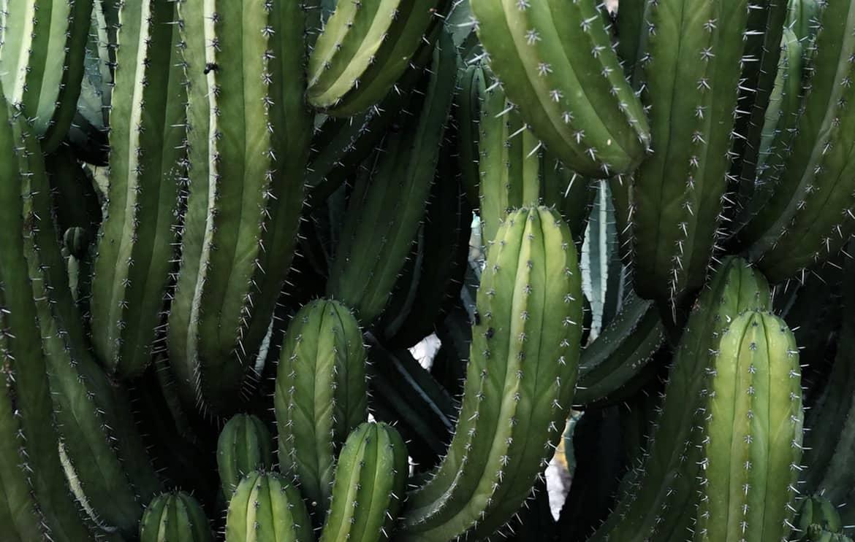 kaktüs toprağı